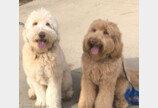 공원서 핏줄 알아본 강아지 형제