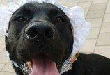 퇴원하는 강아지에게 축하 카드 써준 동물병원