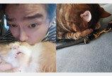 윤균상, 잠에 흠뻑 취한 고양이들