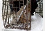 난간도 없는 8층 테라스 지붕에 고양이집 만들어준 사연