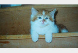 30세로 최고령 등극한 고양이 '루블'