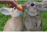 """""""토끼한테 당근은 해롭다""""..충격에 빠진 토끼 주인들"""