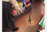 도토리 줍기 지친 다람쥐..가게서 땅콩초코볼 절도