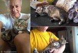 논에서 죽어가던 고양이의 놀라운 `비포&애프터`