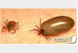 원주서 야생진드기 감염자 2명 추가 발생…올해만 5명