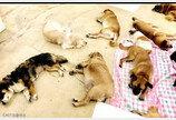 '대프리카' 폭염에 널브러진 고양이들