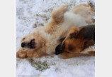 울타리도 막지 못한 두 강아지의 우정