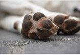 개 발바닥에 콘칩 냄새가 난다?