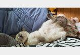 발 하나로 랜선 집사들 심장 붙잡게 만든 고양이