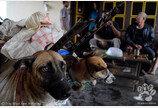 인도네시아, 개·고양이 식용 금지키로