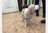 슬쩍 사라진 동물등록률 통계..'정부도 정부를 안 믿는다'