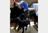'어떻게 갔지?' 무인도에 갇힌 강아지 7마리