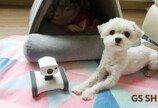 GS마이샵, 반려동물 CCTV '앱봇라일리' 판매
