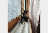 """""""밖은 많이 덥냐옹"""" 길고양이와 친구 맺은 고양이"""