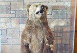 곰의 습격을 막아주는 특수 쓰레기통이 있다