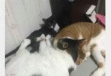 '헬스 끊어줘야 하나요?'..세탁통 돌리는 고양이