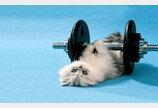 웨이트 트레이닝을 받은 고양이들