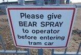 흑곰을 만나면 어떻게 해야 하나?