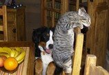 '강아지 키운다는 사실 안 알렸다'..전세계약 파기 사유 안된다