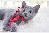 고양이 '메롱'에 홀린듯 모인 집사들