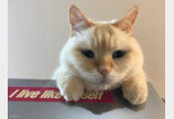모든 고양이가 좋아해도 내 고양이는 싫어하는 맛