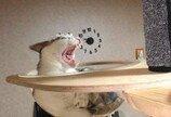 """""""잡았는데!""""..안 보이는 장벽에 '속수무책' 고양이"""
