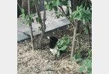 서울야생동물센터 1주년..어미 잃은 새끼 구조가 제일 많아