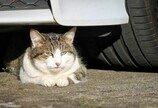 차로 고양이 쳤다고 자랑한 여성의 최후