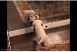 인형 같이 갖고 논 강아지..`알고보니 거울 속 나`