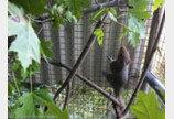 꼬리가 하나로 엉킨 아기다람쥐 5형제