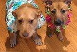 내 강아지에게 출생의 비밀?..쌍둥이맘 된 사연