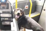강아지 구하려 버스 세운 기사..승객 `박수갈채`