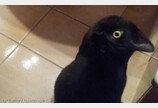 까마귀? 고양이?..구글 인공지능도 속은 착시사진