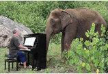 `은퇴 코끼리` 클래식으로 위로한 피아니스트