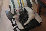 키보드 집착 고양이의 'ESC' 키 사랑