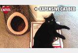 고양이가 좋아하는 화장실이란