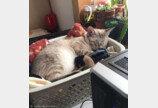 컴퓨터에 고양이 장벽 세운 집사..`복수 끝 타협`