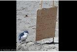 `해변에 나 홀로`..550g 아기펭귄 구한 안내판