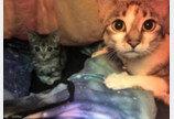 생후 2일째 버려진 '피터팬' 고양이..'그래도 삶은 즐거워!'