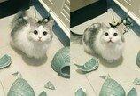 고양이에게 아스피린이 독극물인 이유