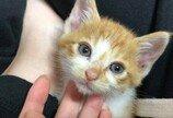 '현상수배'고양이 검거..체념한듯 두 눈 질끈 감아