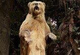 캘리포니아주 깃발에 곰이 그려져 있는 이유