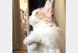 """""""심장이 아파..""""..'이것'으로 집사들 사로잡은 고양이"""