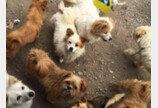 """펫숍업계 """"동물보호단체, 감성포르노 중단..후원금 투명 공개해야"""""""
