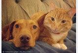 주인 없을 때만 `꽁냥꽁냥`한 개와 고양이