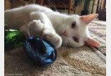앞 못 보던 고양이, 세상에서 가장 아름다운 눈을 뜨다