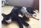 잠보 고양이와 장난꾸러기 집사의 케미 돋는 일상