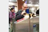 매일 수백 명의 열차 통근자들에게 인사해주는 길고양이