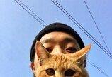 시골 할머니 댁에 입양된 고양이의 '귀농' 일 년 차 모습