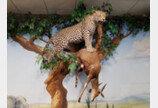 표범, 재규어 그리고 치타..빅캣 구별법